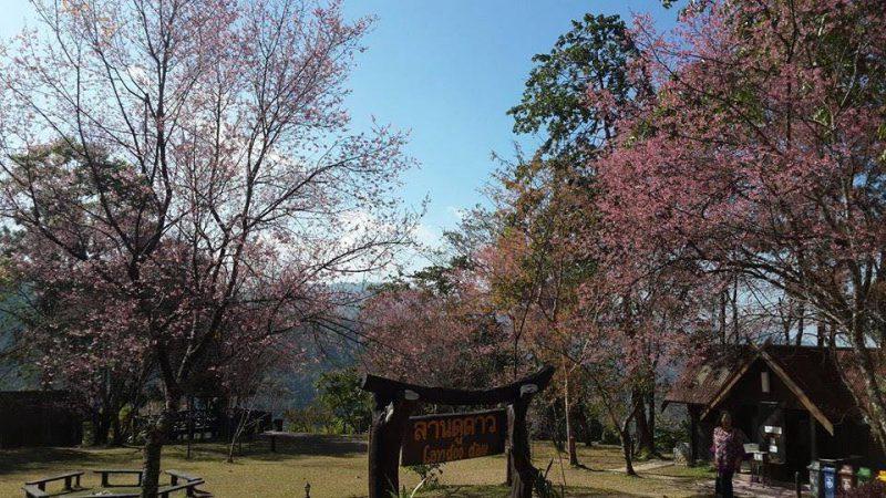 ลานดูดาว ที่พักอุทยานแห่งชาติภูคา ที่พักบ่อเกลือ